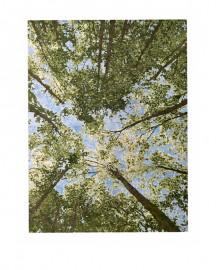 Tapis Canopée, Soie de Bambou 417x308 cm