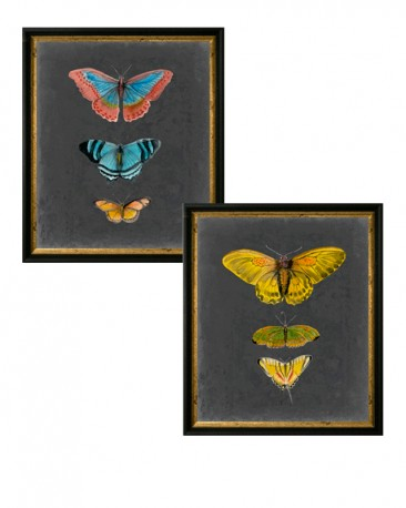 Watercolor Butterflies Reproductions - Set of 2