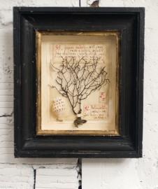 Herbarium, antique style