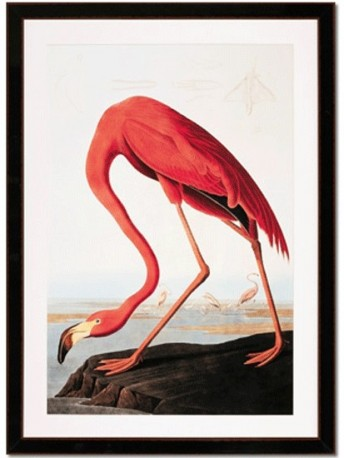 flamand rose impression gravure peinture audubon jean. Black Bedroom Furniture Sets. Home Design Ideas