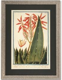 """Bonelli Prints """"Cactus et Aloe"""""""