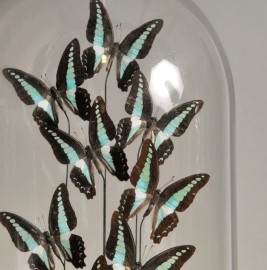 Globe Papillons Turquoises