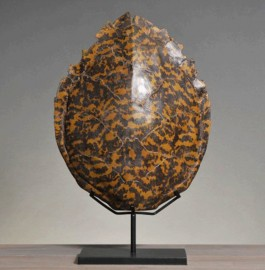 Turtle Shell - Reproduction