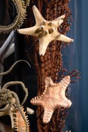 Etoiles de mer en famille sous Globe