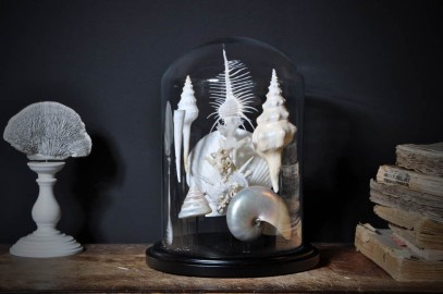 Collection de Coquillages Blancs sous Globe