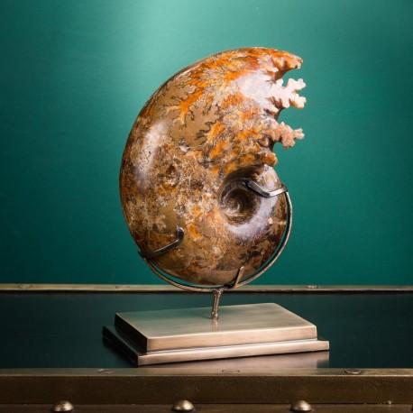 Ammonite on Brass Base