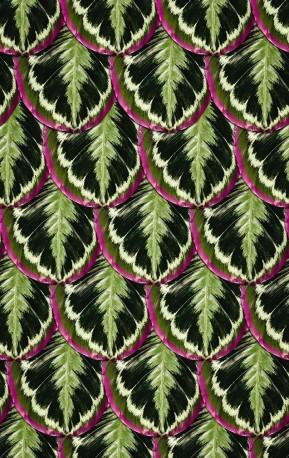 Wall Paper SUCCULENT PLANTS, Roll 1000x50cm
