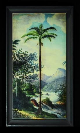 Gravures Anciennes Palmiers - La Paire