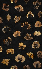Wall Paper SEA WEED, Roll 1000x50cm