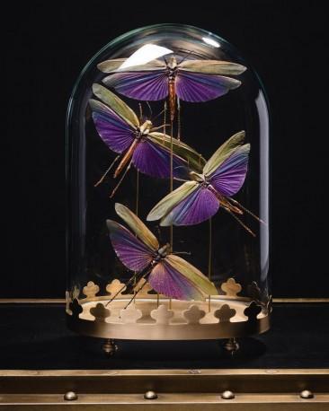 Globe de 4 criquets violets, Guyane