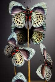 Mini Globe 5 Magnifiques Papillons Bleu A. LEPRIEURI