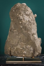 Ammonite (Madagascar) on a black metal display