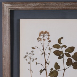 Genuine Old Herbs Frame, Set of 12
