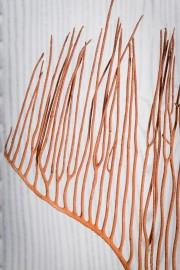 Gorgone Orangée sur Socle
