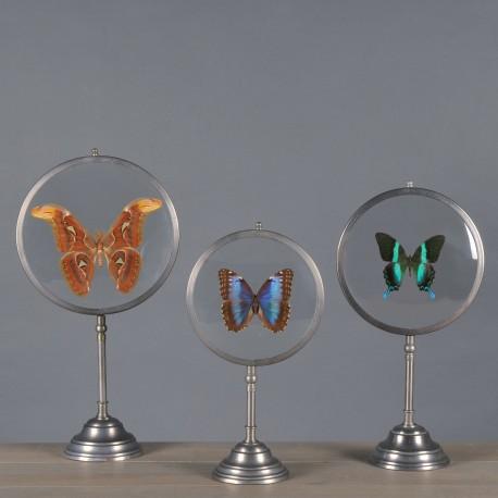Coraux et papillons - Set de 3