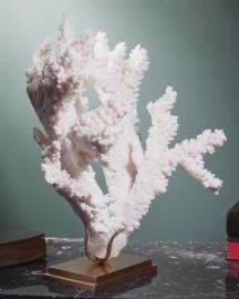 Branch Coral ACROPORA FLORIDA
