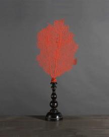 Gorgone Rouge Impérial Sur Pied - H 30 cm