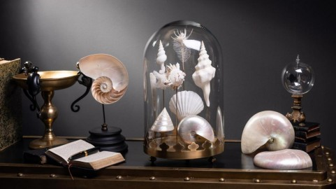 Coquillages Blancs sous Globe Base Laiton