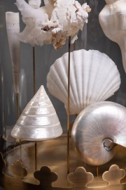 White Sea Shells Under Glass Brass Base
