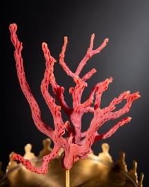 Corail rouge de Méditérranée dans Reliquaire