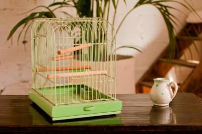 Cage à oiseaux verte