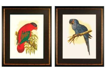Deux gravures aux perroquets